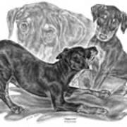 Puppy Love - Doberman Pinscher Pup Art Print