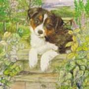 Puppy On The Step Art Print