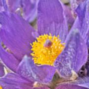 Purple And Gold - Bright Art Print
