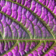 Purple And Green Leaf Art Print