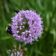 Purple And The Bee Art Print