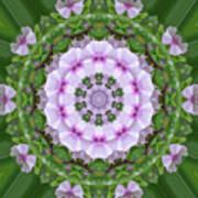 Purple And White Flowers  Art Print