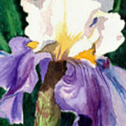Purple And White Iris Print by Janis Grau