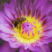 Purple And Yellow Lotus With A Bee Textured Art Print