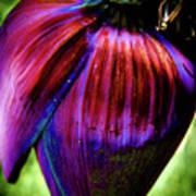 Purple Banana Pod Art Print
