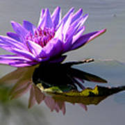 Purple Beauty On The Pond Art Print
