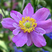 Purple Blossom 1 Art Print