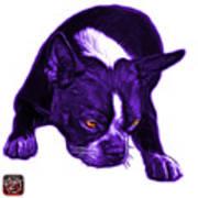 Purple Boston Terrier Art - 8384 - Wb Art Print