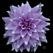Purple Dahlia Cutout Art Print