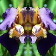 Purple Dream Two  Art Print