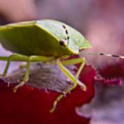 Purple Eyed Green Stink Bug Art Print