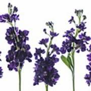 Purple Floral 1 Art Print