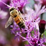 Purple Flower Bee Art Print