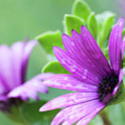 Purple Flower Closeup Art Print