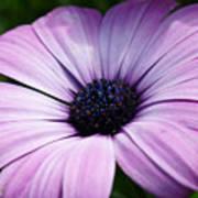 Purple Flower Macro Art Print