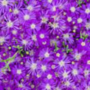 Purple Flowers Print by Frank Tschakert