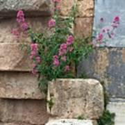 Purple Flowers In Ruins Art Print