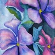 Purple Hibiscus Art Print