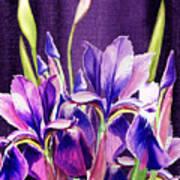 Purple Iris Dance  Art Print
