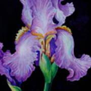 Purple Iris II Art Print