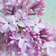Purple Lilacs With Text Art Print
