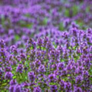 Purple Meadow 3 Art Print