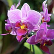 Purple Orchids 2 Art Print