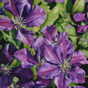 Purple Persuasion Art Print