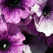 Purple Petunia Paradise Art Print