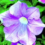 Purple Petunias 2 Art Print