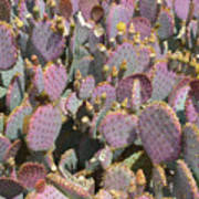 Purple Prickly Pear 3 Art Print