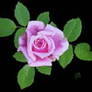 Purple Rosebud2 Cutout Art Print