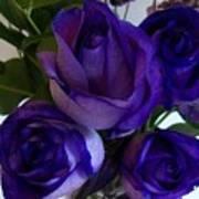 Purple Roses Ll Art Print by Marsha Heiken
