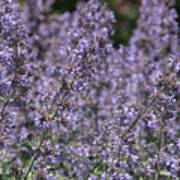 Purple Spikes Flora Impression 6.8.17  Art Print