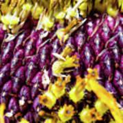 Purple Sunflower Seeds Art Print