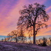 Purple Sunrise Art Print