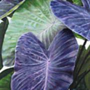 Purple Taro Art Print