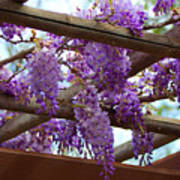 Purple Trellis Art Print