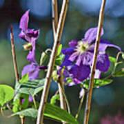 Purple Vine Flower Art Print