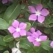 Purple Vintas Flower Photograph Art Print