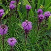 Purple Wildflowers Art Print