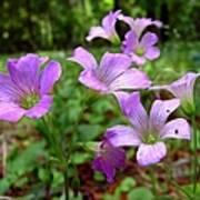Purple Wildflowers Macro 2 Art Print