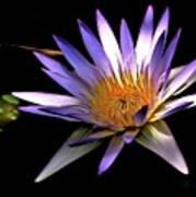 Purple Zen Art Print