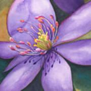 Purple's Passion Art Print