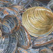 Quahog On Clams Art Print