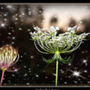 Queen Annes Lace And Sparkles At Dusk Art Print