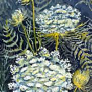 Queen Anne's Lace Art Print