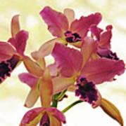 Queen Of Orchids Art Print