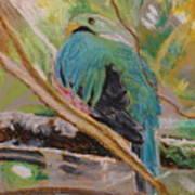 Quetzal In Costa Rica Art Print
