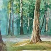 Quiet Forest Art Print
